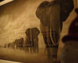 Elephants Walking Through Grass - Nick Brandt